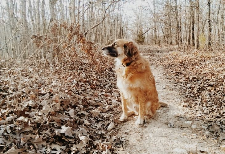 dog wait for his owner - Mark Twain Dog Quotes