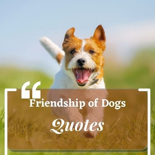 About the Friendship of Dogs quotes