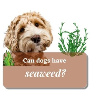 Can-dogs-have-seaweed-2