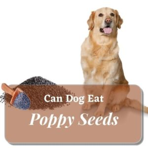 Can your dog eat poppy seeds