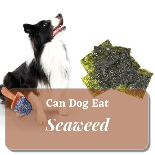 Can your dog eat seaweed