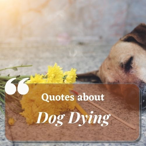 Dog Dying quotes