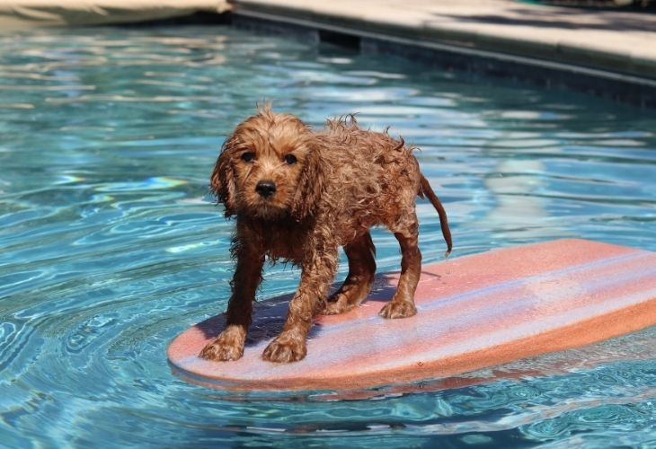 a dog in the pool water