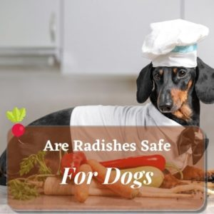 Radishes Safe For Dogs