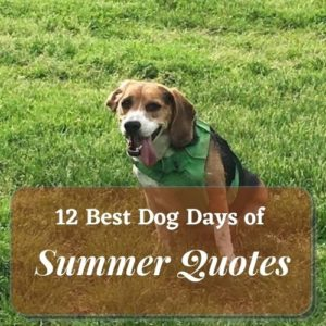 a dog in the green lawn with hot summer day