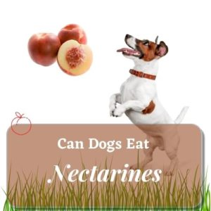 can dog eat Nectarines