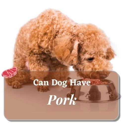 can dog have pork - ihavedog.com