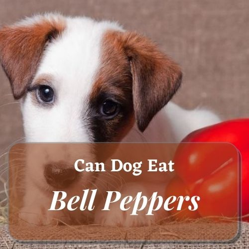 dog est Bell Peppers
