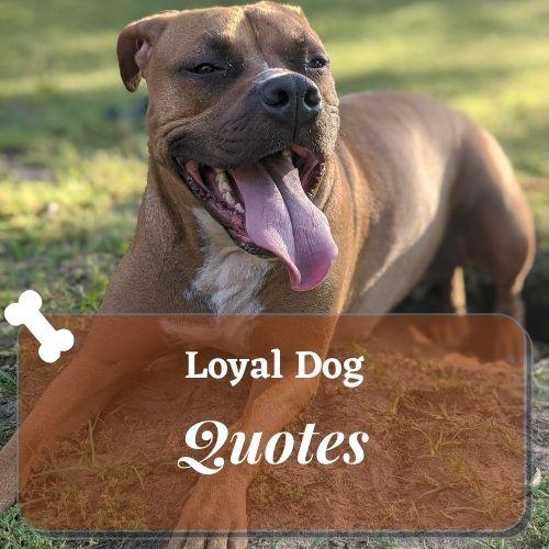 loyal dog quotes