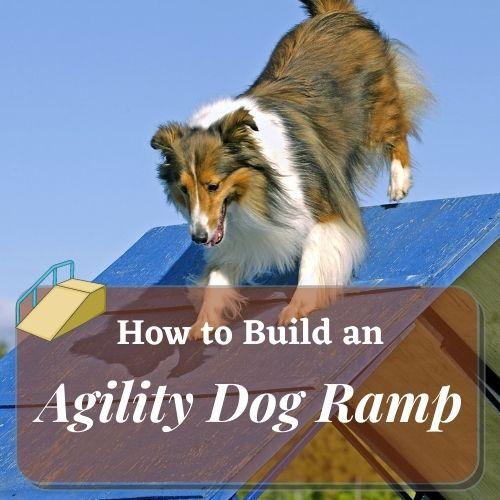 How to bulid an agility dog ramp