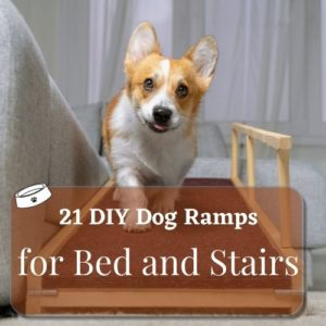 21 tips dog ramps(featured image)