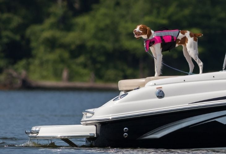 dog stand in the boat