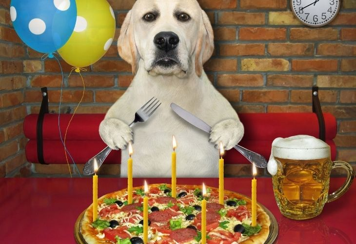 Can Dogs Have Pizza Crust