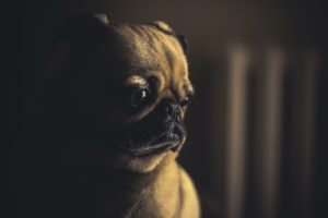 can dogs be depressed