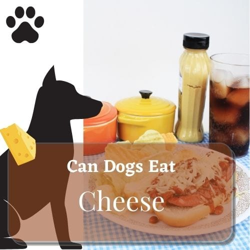 can dog eat cheese