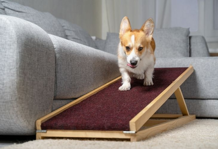 Adjustable Dog Ramps for couches