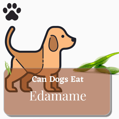 can dog eat edamame